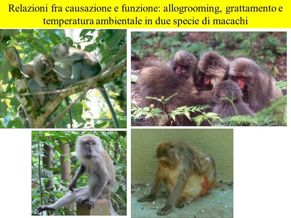 Relazioni fra causazione e funzione: allogrooming, grattamento e temperatura ambientale in due specie di macachi