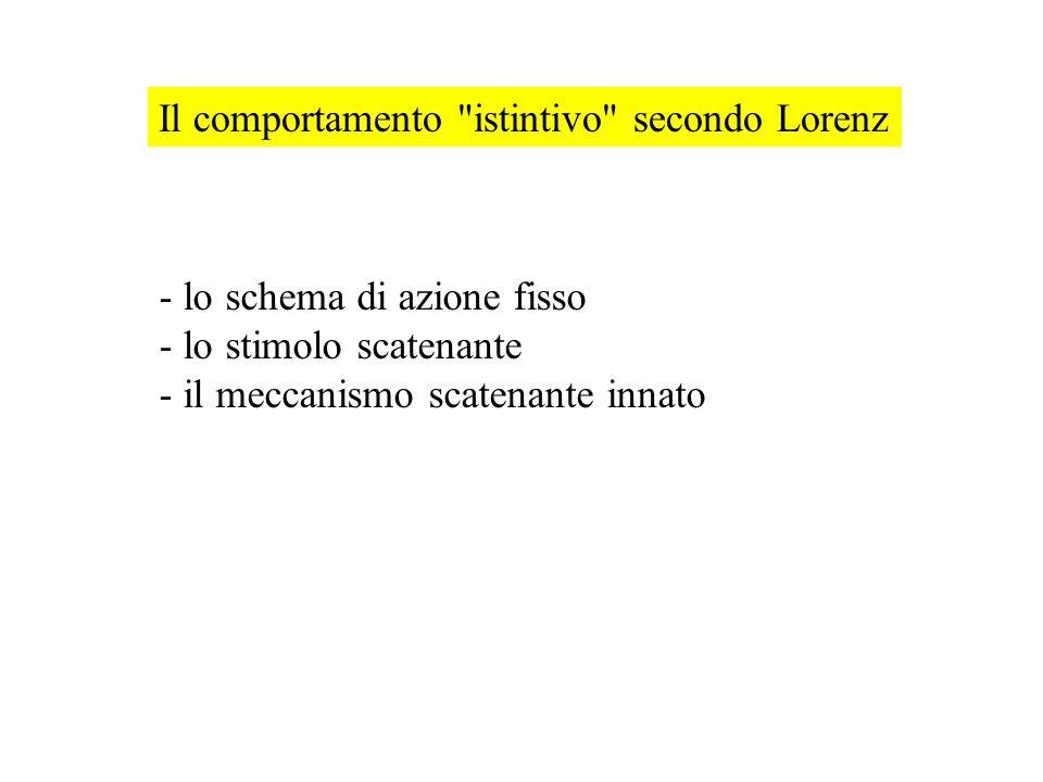 Il comportamento istintivo secondo Lorenz - lo schema di azione fisso - lo stimolo scatenante - il meccanismo scatenante innato