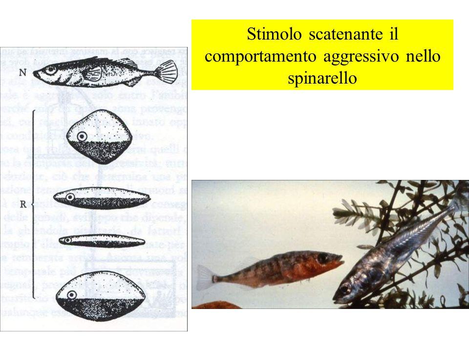 Il riconoscimento di un potenziale predatore da parte degli anatroccoli oca falco