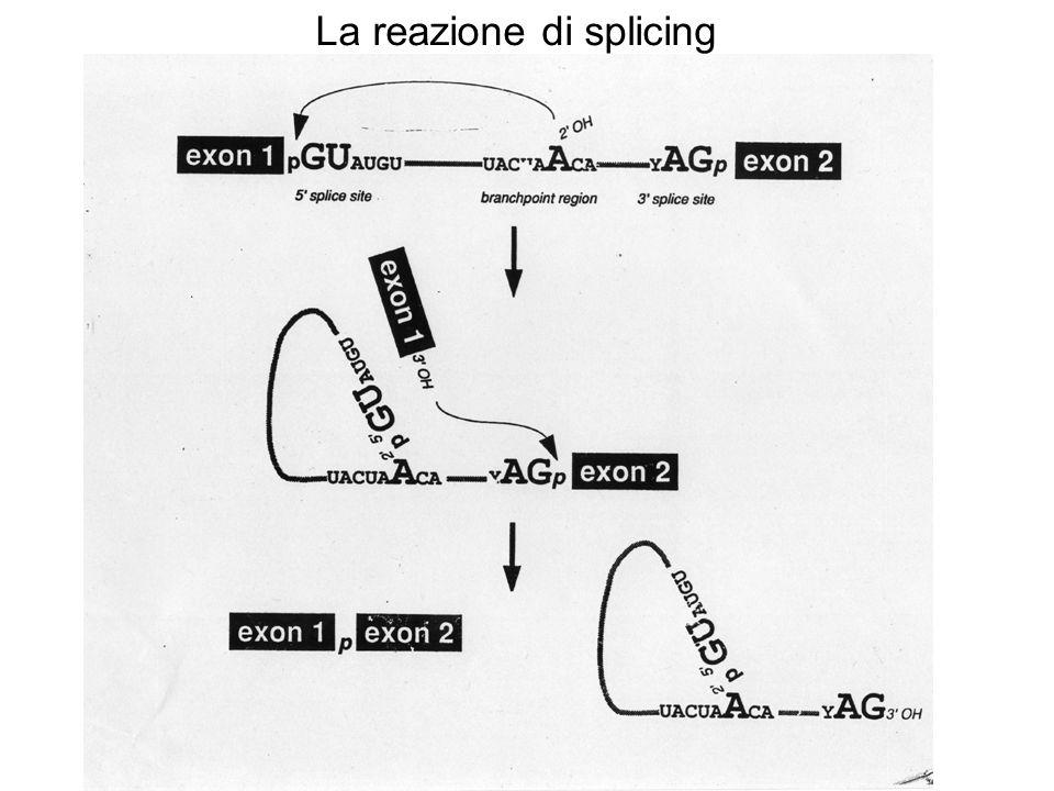 La reazione di splicing
