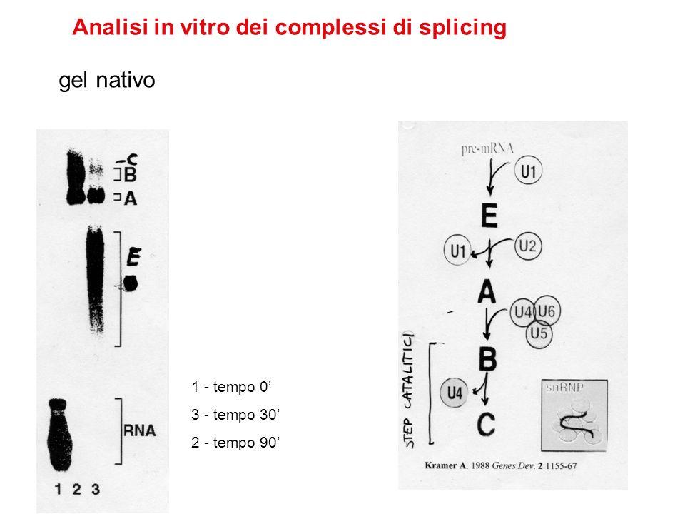 5 snRNPs 1.