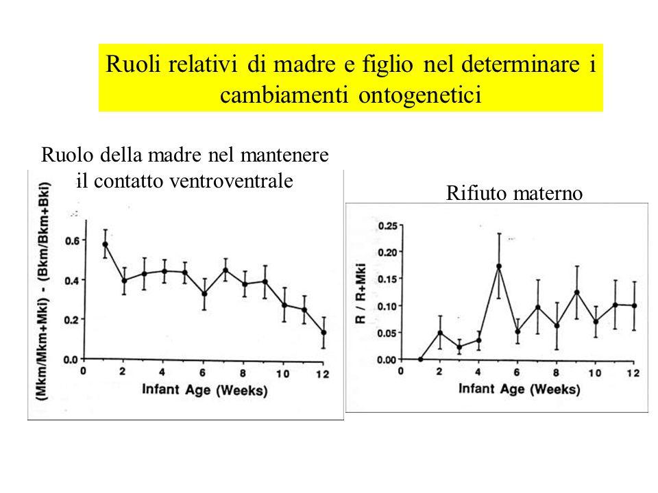 Ruoli relativi di madre e figlio nel determinare i cambiamenti ontogenetici Rifiuto materno Ruolo della madre nel mantenere il contatto ventroventrale