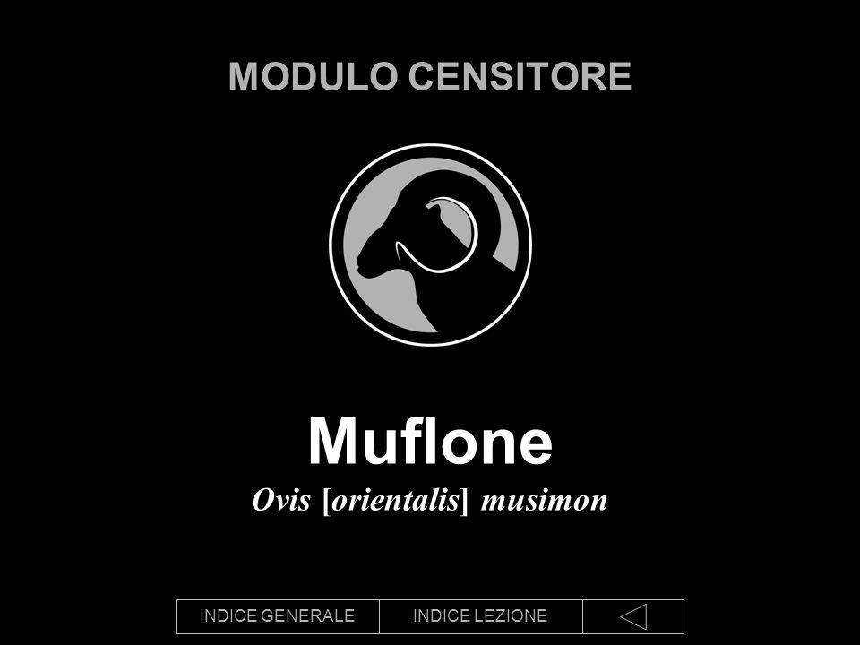 INDICE GENERALEINDICE LEZIONE Muflone Ovis [orientalis] musimon MODULO CENSITORE