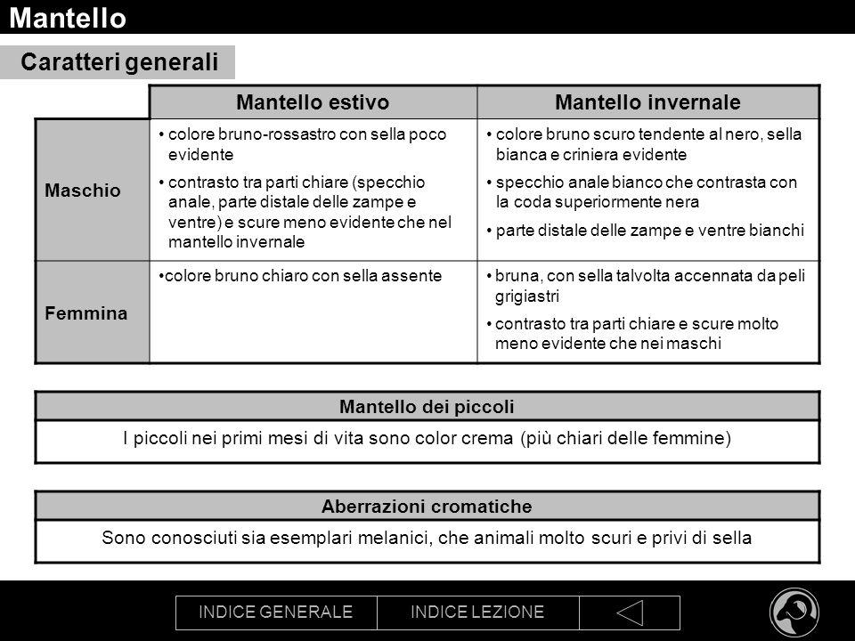 INDICE GENERALEINDICE LEZIONE Mantello Mantello estivoMantello invernale Maschio colore bruno-rossastro con sella poco evidente contrasto tra parti ch