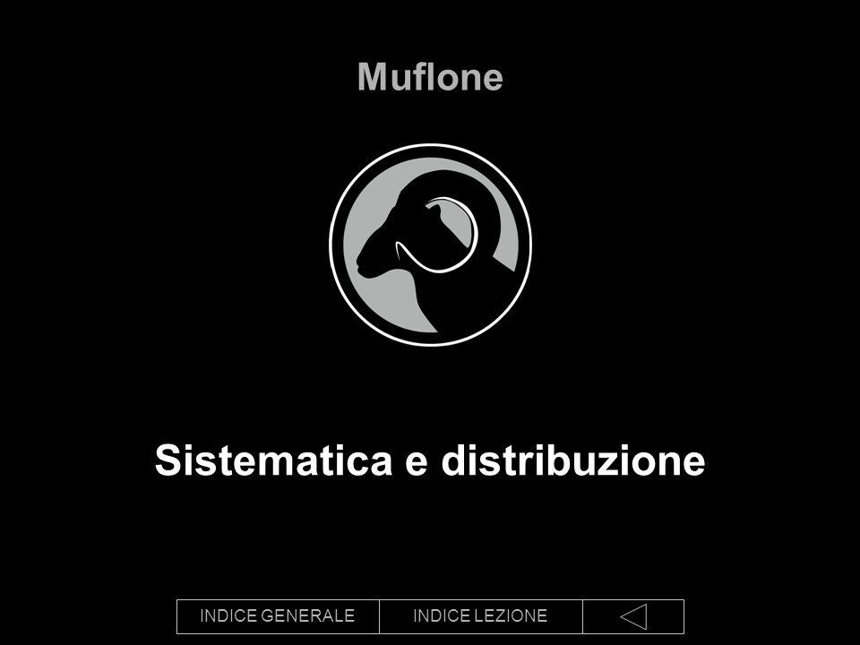 INDICE GENERALEINDICE LEZIONE Sistematica e distribuzione Muflone