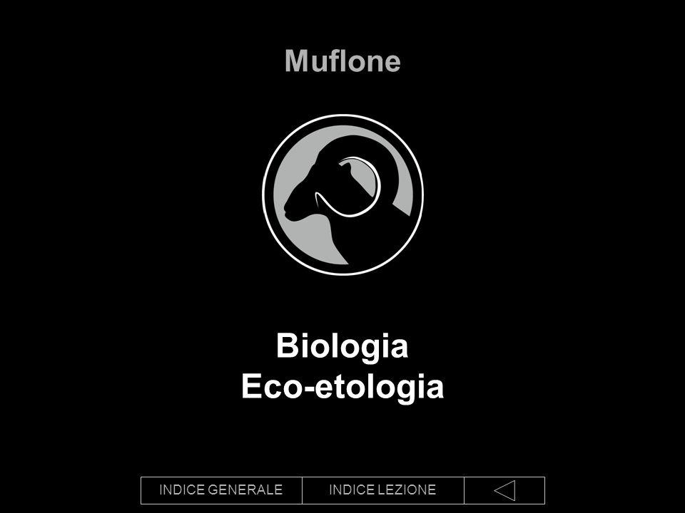 INDICE GENERALEINDICE LEZIONE Biologia Eco-etologia Muflone