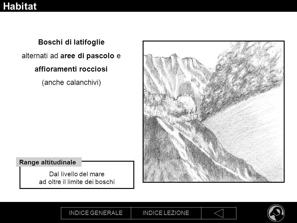 INDICE GENERALEINDICE LEZIONE Habitat Boschi di latifoglie alternati ad aree di pascolo e affioramenti rocciosi (anche calanchivi) Dal livello del mar