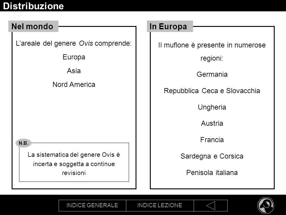 INDICE GENERALEINDICE LEZIONE Distribuzione Lareale del genere Ovis comprende: Europa Asia Nord America Nel mondo La sistematica del genere Ovis è inc