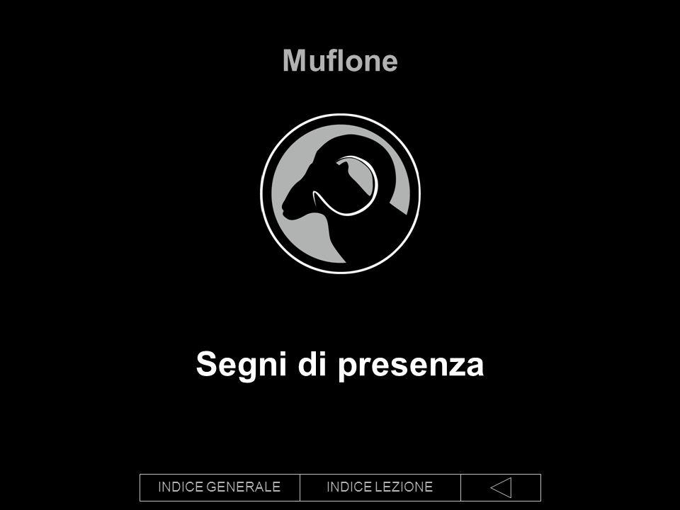 INDICE GENERALEINDICE LEZIONE Segni di presenza Muflone