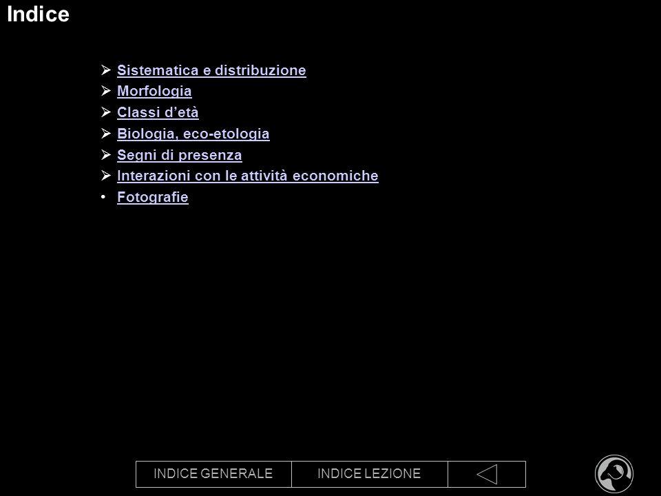 INDICE GENERALEINDICE LEZIONE Indice Sistematica e distribuzione Morfologia Classi detà Biologia, eco-etologia Segni di presenza Interazioni con le at