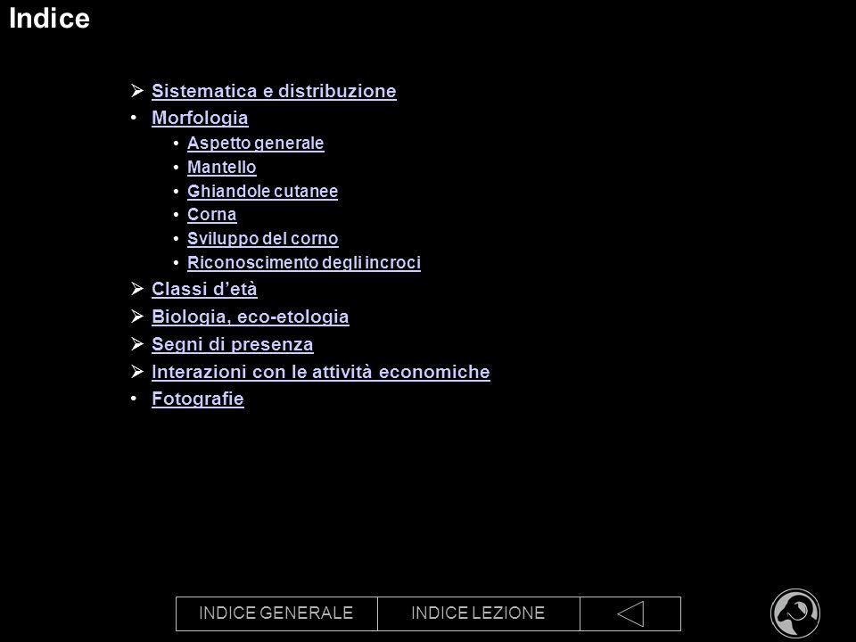 INDICE GENERALEINDICE LEZIONE Indice Sistematica e distribuzione Morfologia Aspetto generale Mantello Ghiandole cutanee Corna Sviluppo del corno Ricon