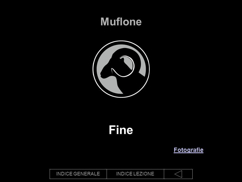 INDICE GENERALEINDICE LEZIONE Fine Muflone Fotografie