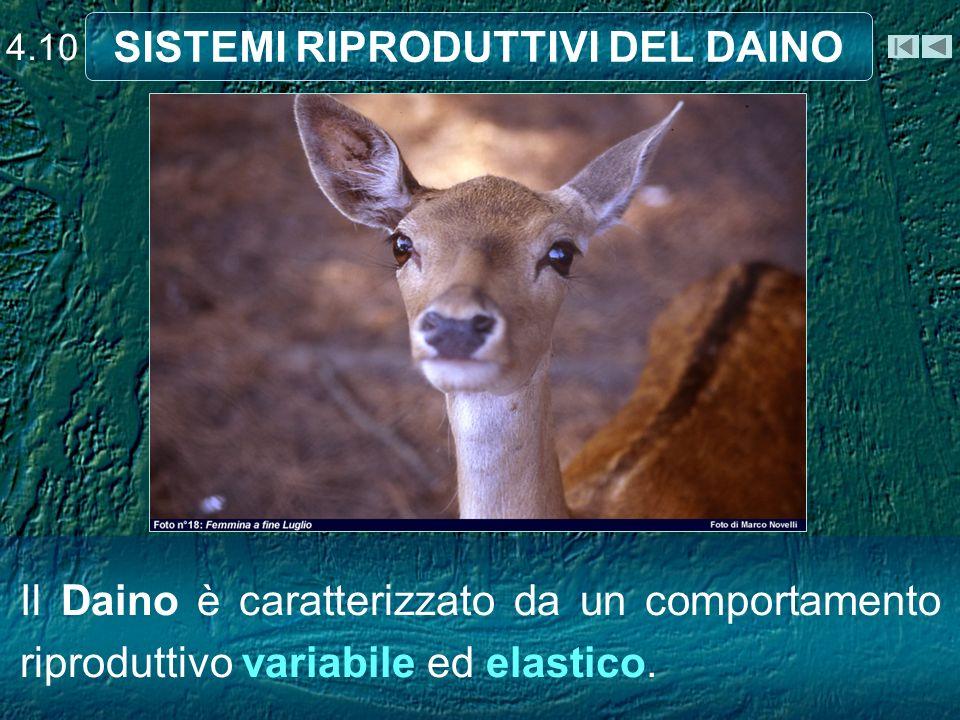 SISTEMI RIPRODUTTIVI DEL DAINO Il Daino è caratterizzato da un comportamento riproduttivo variabile ed elastico. 4.10