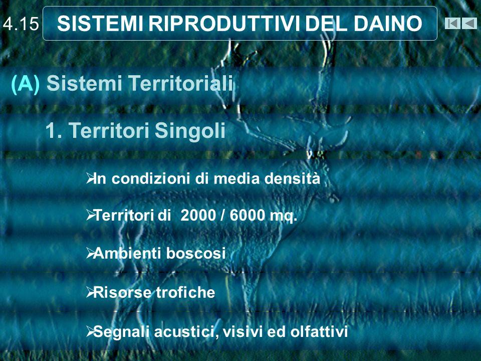 4.15 SISTEMI RIPRODUTTIVI DEL DAINO In condizioni di media densità Territori di 2000 / 6000 mq. Ambienti boscosi Risorse trofiche Segnali acustici, vi
