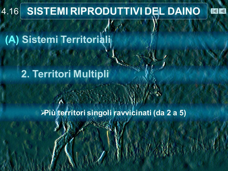 4.16 SISTEMI RIPRODUTTIVI DEL DAINO Più territori singoli ravvicinati (da 2 a 5) (A) Sistemi Territoriali 2.