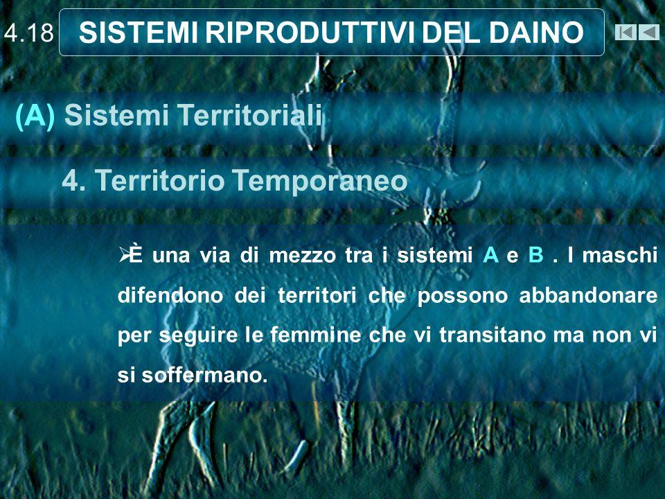 4.18 SISTEMI RIPRODUTTIVI DEL DAINO È una via di mezzo tra i sistemi A e B. I maschi difendono dei territori che possono abbandonare per seguire le fe