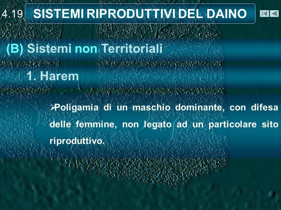 4.19 SISTEMI RIPRODUTTIVI DEL DAINO Poligamia di un maschio dominante, con difesa delle femmine, non legato ad un particolare sito riproduttivo.