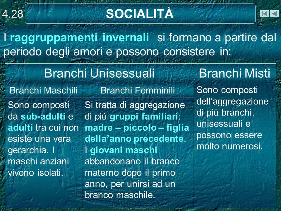 SOCIALITÀ 4.28 I raggruppamenti invernali si formano a partire dal periodo degli amori e possono consistere in: Si tratta di aggregazione di più grupp