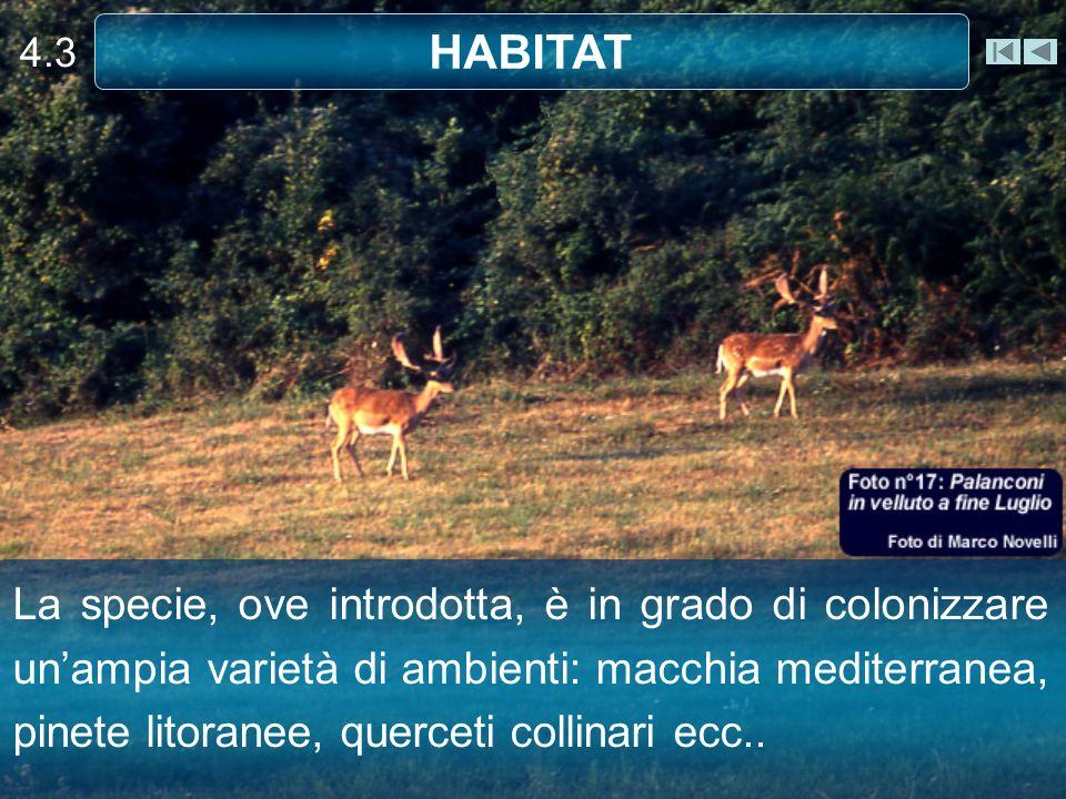 4.3 HABITAT La specie, ove introdotta, è in grado di colonizzare unampia varietà di ambienti: macchia mediterranea, pinete litoranee, querceti collinari ecc..