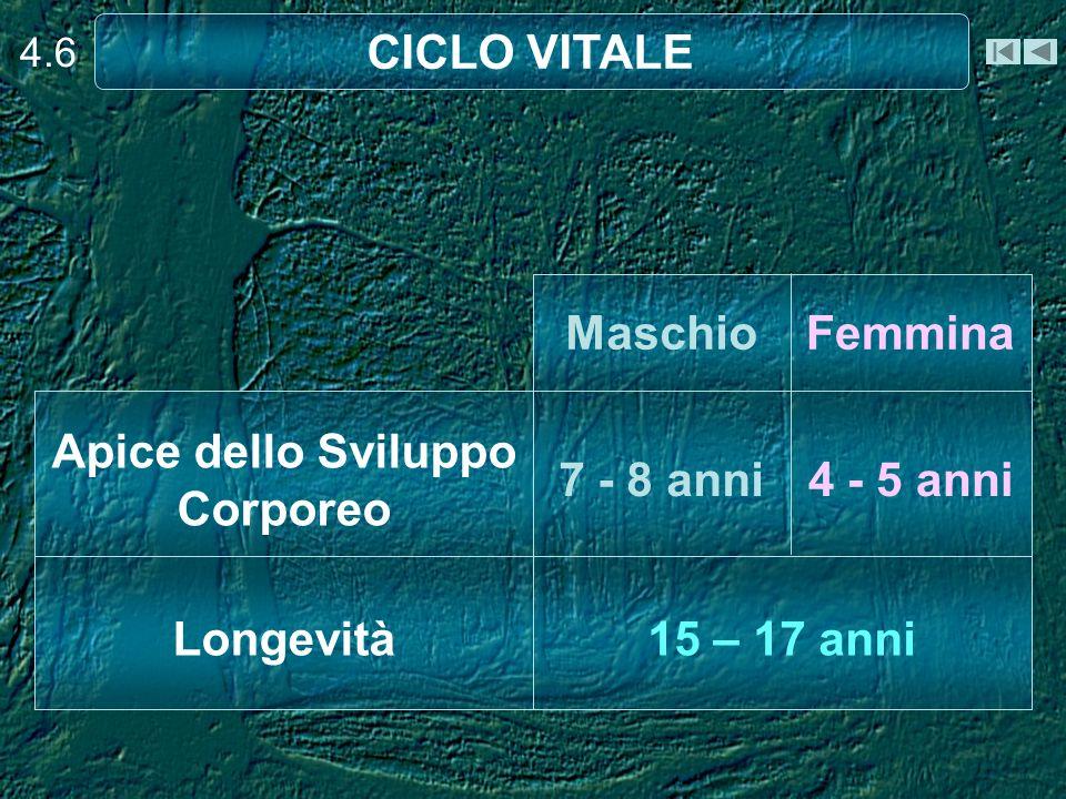 4.6 CICLO VITALE 15 – 17 anniLongevità 4 - 5 anni7 - 8 anni Apice dello Sviluppo Corporeo FemminaMaschio