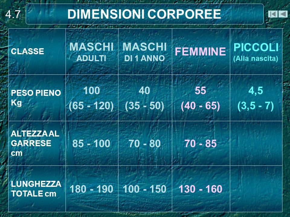 4.7 DIMENSIONI CORPOREE 130 - 160100 - 150180 - 190 LUNGHEZZA TOTALE cm 70 - 8570 - 8085 - 100 ALTEZZA AL GARRESE cm 4,5 (3,5 - 7) 55 (40 - 65) 40 (35 - 50) 100 (65 - 120) PESO PIENO Kg PICCOLI (Alla nascita) FEMMINE MASCHI DI 1 ANNO MASCHI ADULTI CLASSE