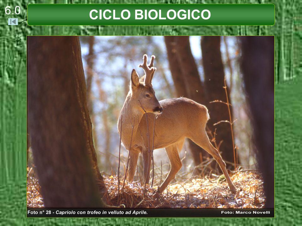 CICLO BIOLOGICO 6.11