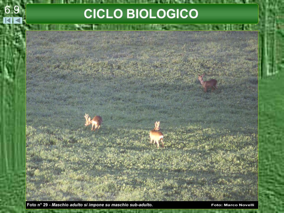 CICLO BIOLOGICO 6.9