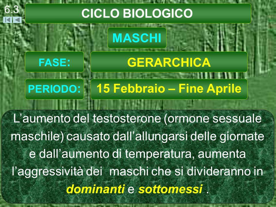 CICLO BIOLOGICO 6.4