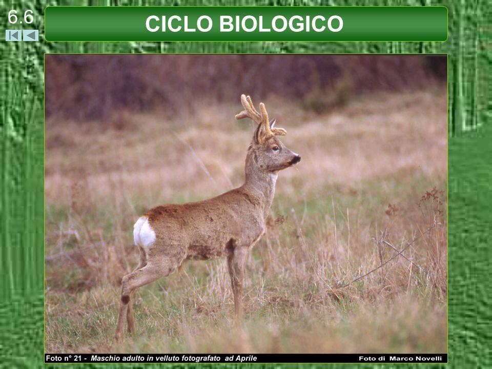 CICLO BIOLOGICO 6.7