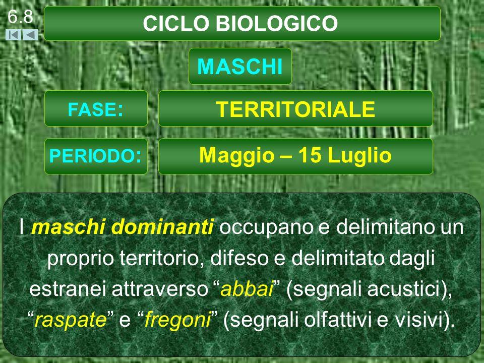 CICLO BIOLOGICO 6.19