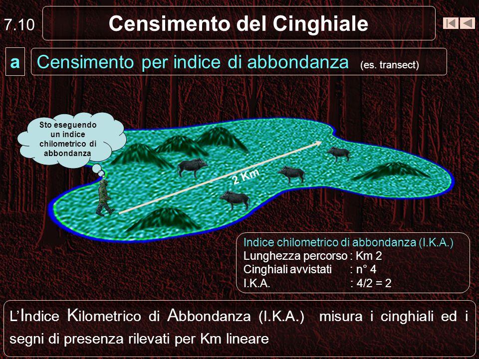 Censimento del Cinghiale L I ndice K ilometrico di A bbondanza (I.K.A.) misura i cinghiali ed i segni di presenza rilevati per Km lineare Censimento p
