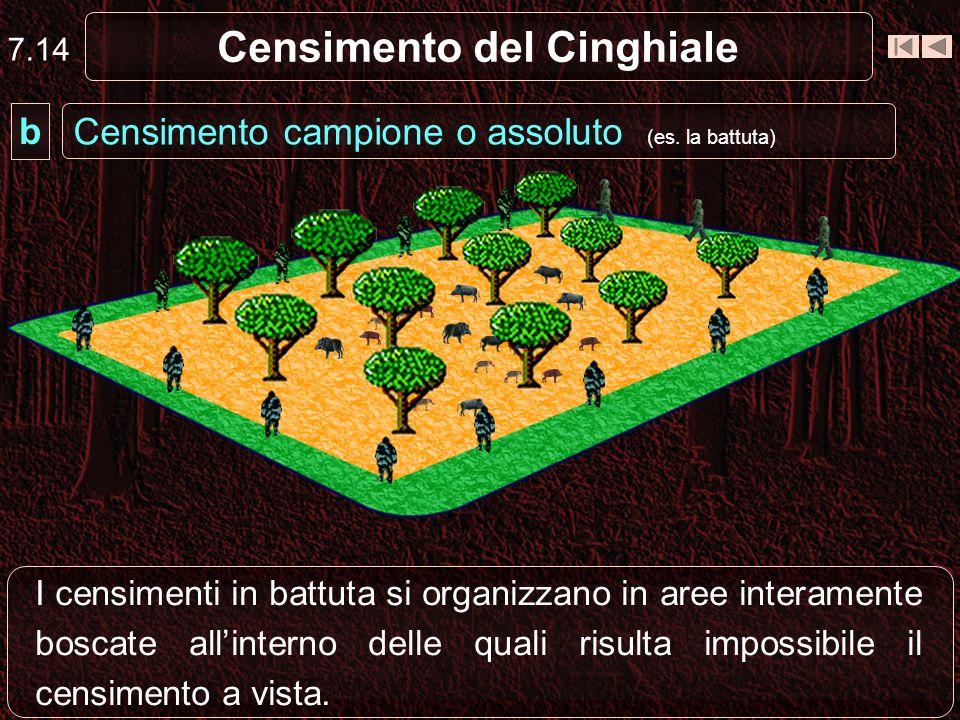 Censimento del Cinghiale I censimenti in battuta si organizzano in aree interamente boscate allinterno delle quali risulta impossibile il censimento a