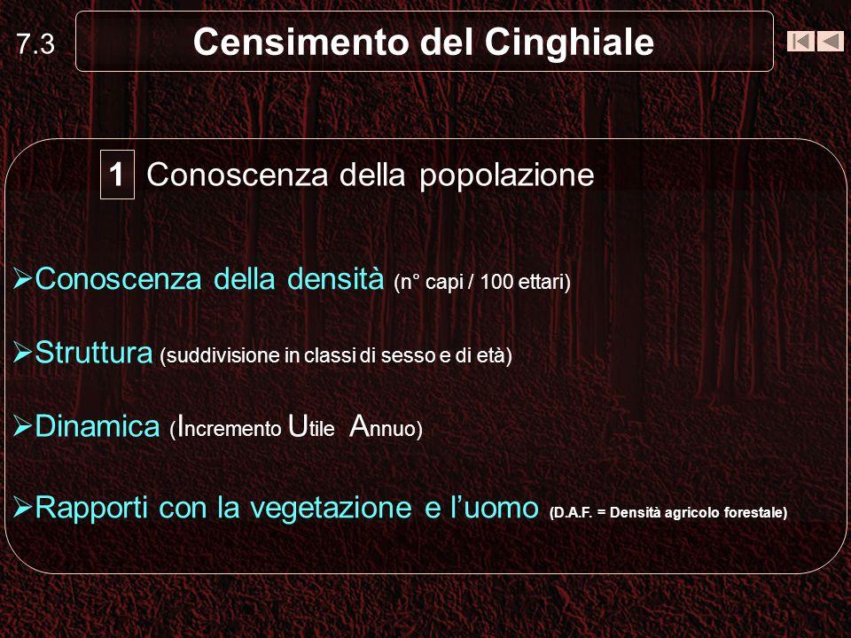 7.3 Censimento del Cinghiale Conoscenza della popolazione Conoscenza della densità (n° capi / 100 ettari) Struttura (suddivisione in classi di sesso e
