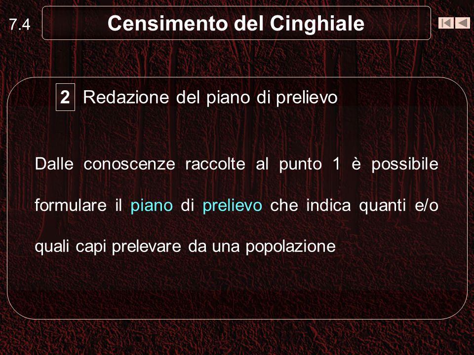 7.4 Censimento del Cinghiale Redazione del piano di prelievo 2 Dalle conoscenze raccolte al punto 1 è possibile formulare il piano di prelievo che ind