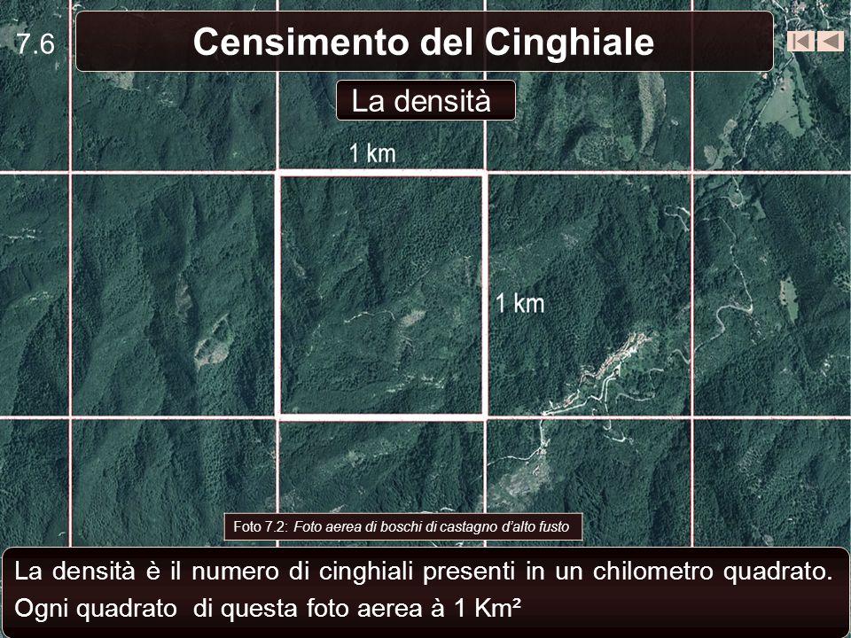 7.6 Censimento del Cinghiale Foto 7.2: Foto aerea di boschi di castagno dalto fusto La densità è il numero di cinghiali presenti in un chilometro quad