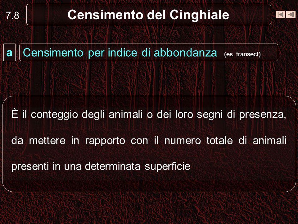 7.8 Censimento del Cinghiale È il conteggio degli animali o dei loro segni di presenza, da mettere in rapporto con il numero totale di animali present
