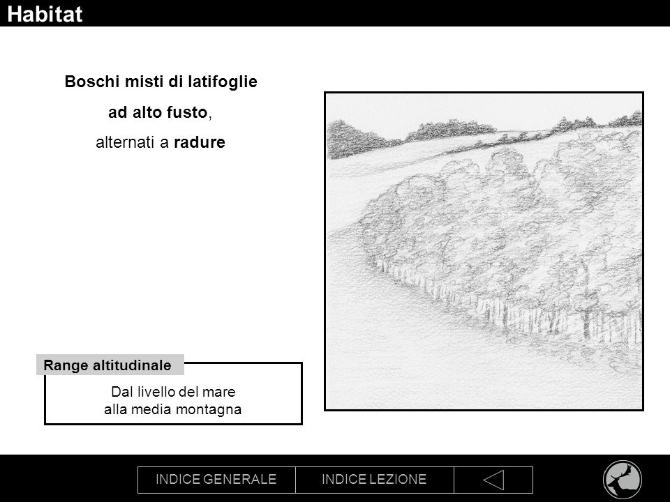 INDICE GENERALEINDICE LEZIONE Habitat Boschi misti di latifoglie ad alto fusto, alternati a radure Dal livello del mare alla media montagna Range alti