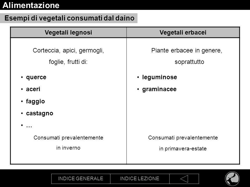 INDICE GENERALEINDICE LEZIONE Alimentazione Esempi di vegetali consumati dal daino Vegetali legnosiVegetali erbacei Corteccia, apici, germogli, foglie