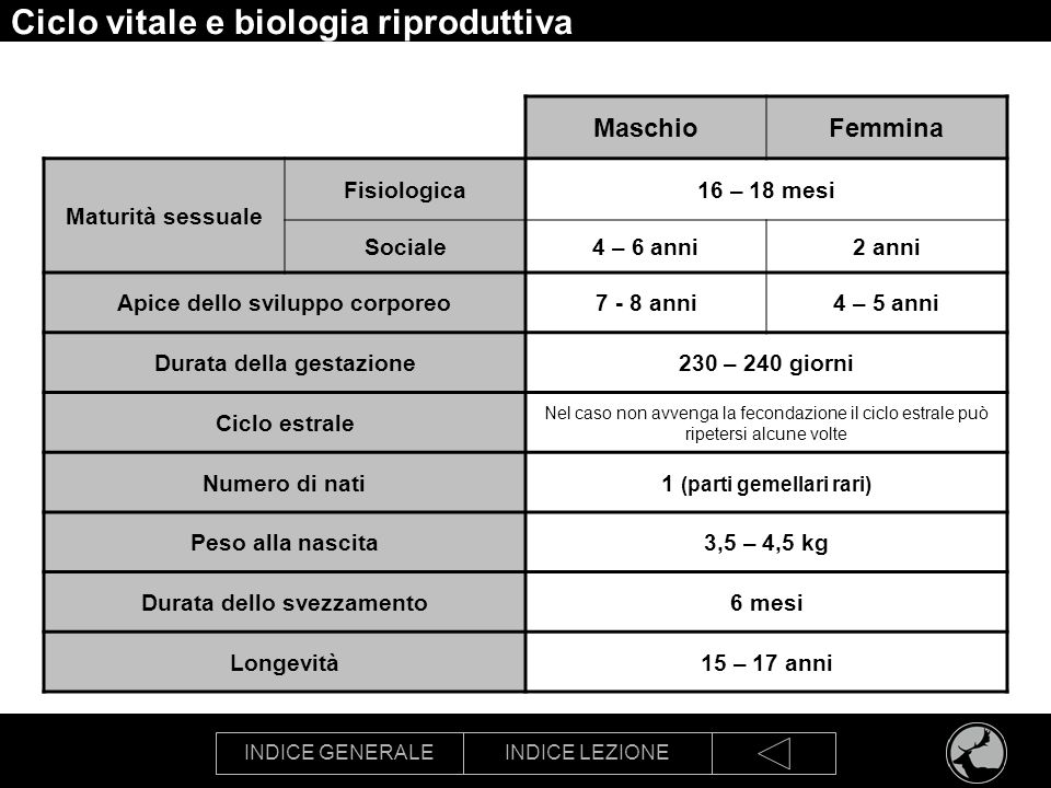 INDICE GENERALEINDICE LEZIONE Ciclo vitale e biologia riproduttiva MaschioFemmina Maturità sessuale Fisiologica16 – 18 mesi Sociale4 – 6 anni2 anni Ap
