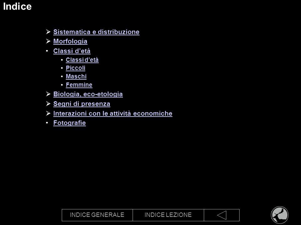 INDICE GENERALEINDICE LEZIONE Indice Sistematica e distribuzione Morfologia Classi detà Piccoli Maschi Femmine Biologia, eco-etologia Segni di presenz