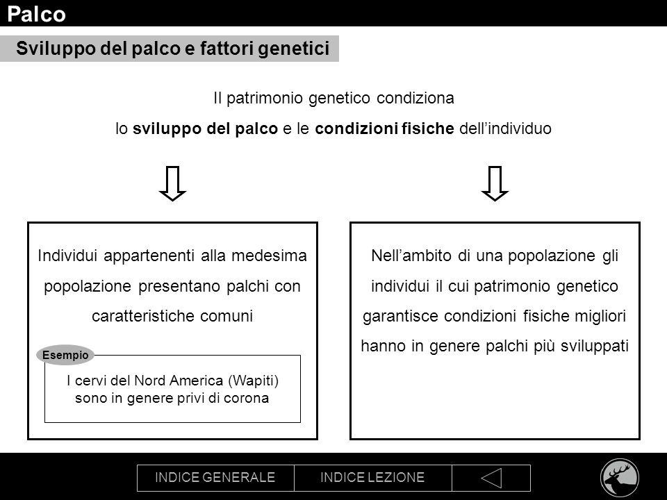 INDICE GENERALEINDICE LEZIONE Palco Sviluppo del palco e fattori genetici Individui appartenenti alla medesima popolazione presentano palchi con carat