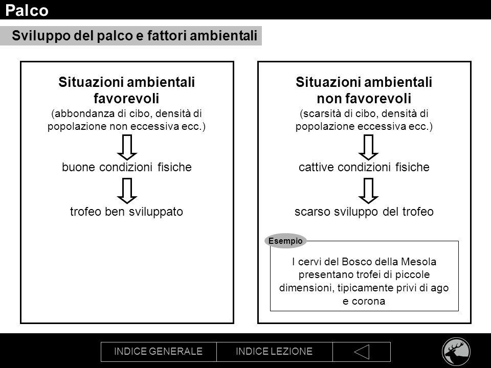 INDICE GENERALEINDICE LEZIONE Palco Sviluppo del palco e fattori ambientali Situazioni ambientali favorevoli (abbondanza di cibo, densità di popolazio