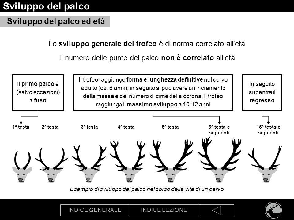INDICE GENERALEINDICE LEZIONE Sviluppo del palco Esempio di sviluppo del palco nel corso della vita di un cervo Sviluppo del palco ed età Lo sviluppo