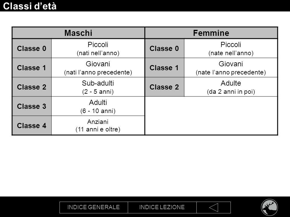 INDICE GENERALEINDICE LEZIONE Classi detà MaschiFemmine Classe 0 Piccoli (nati nellanno) Classe 0 Piccoli (nate nellanno) Classe 1 Giovani (nati lanno