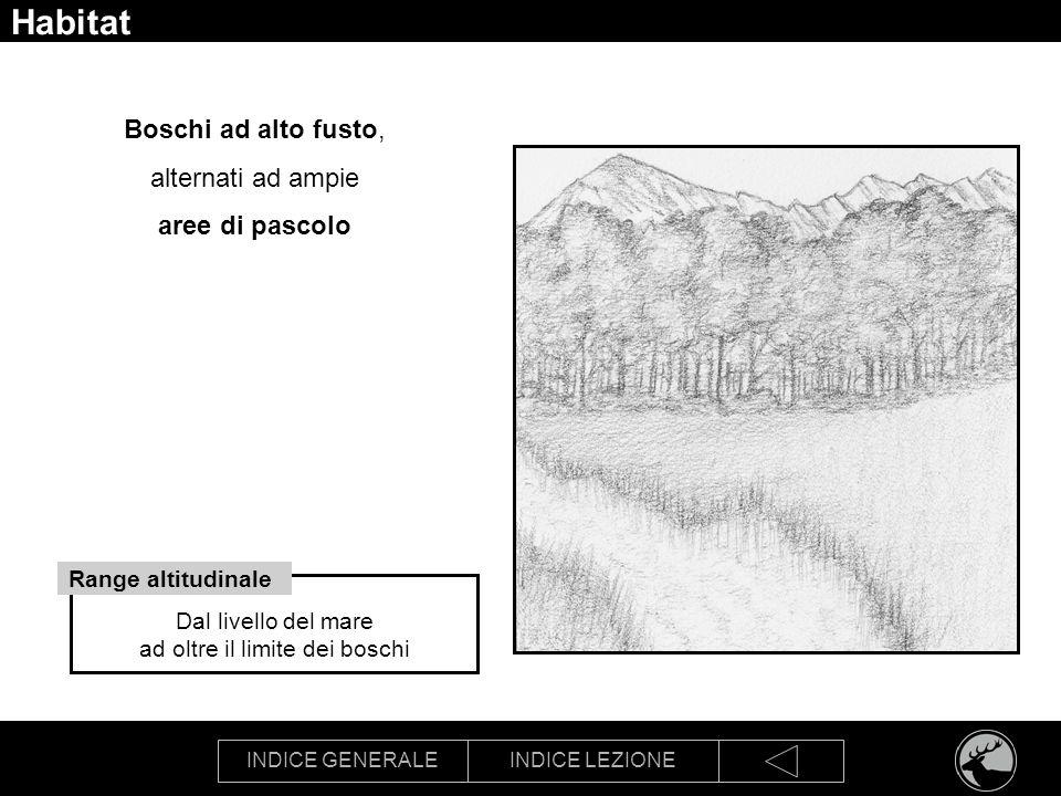 INDICE GENERALEINDICE LEZIONE Habitat Boschi ad alto fusto, alternati ad ampie aree di pascolo Dal livello del mare ad oltre il limite dei boschi Rang