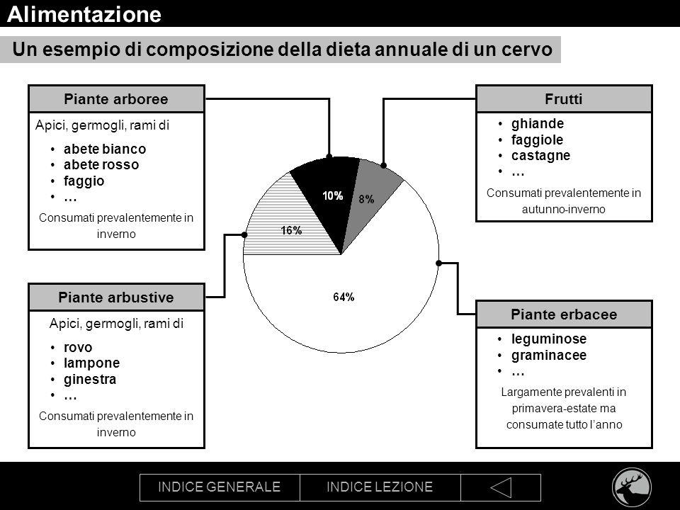 INDICE GENERALEINDICE LEZIONE Alimentazione Un esempio di composizione della dieta annuale di un cervo Frutti ghiande faggiole castagne … Consumati pr