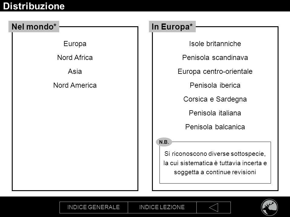 INDICE GENERALEINDICE LEZIONE Distribuzione Europa Nord Africa Asia Nord America Nel mondo* Si riconoscono diverse sottospecie, la cui sistematica è t
