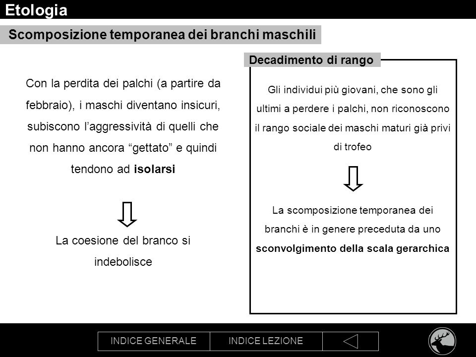 INDICE GENERALEINDICE LEZIONE Etologia Scomposizione temporanea dei branchi maschili Con la perdita dei palchi (a partire da febbraio), i maschi diven