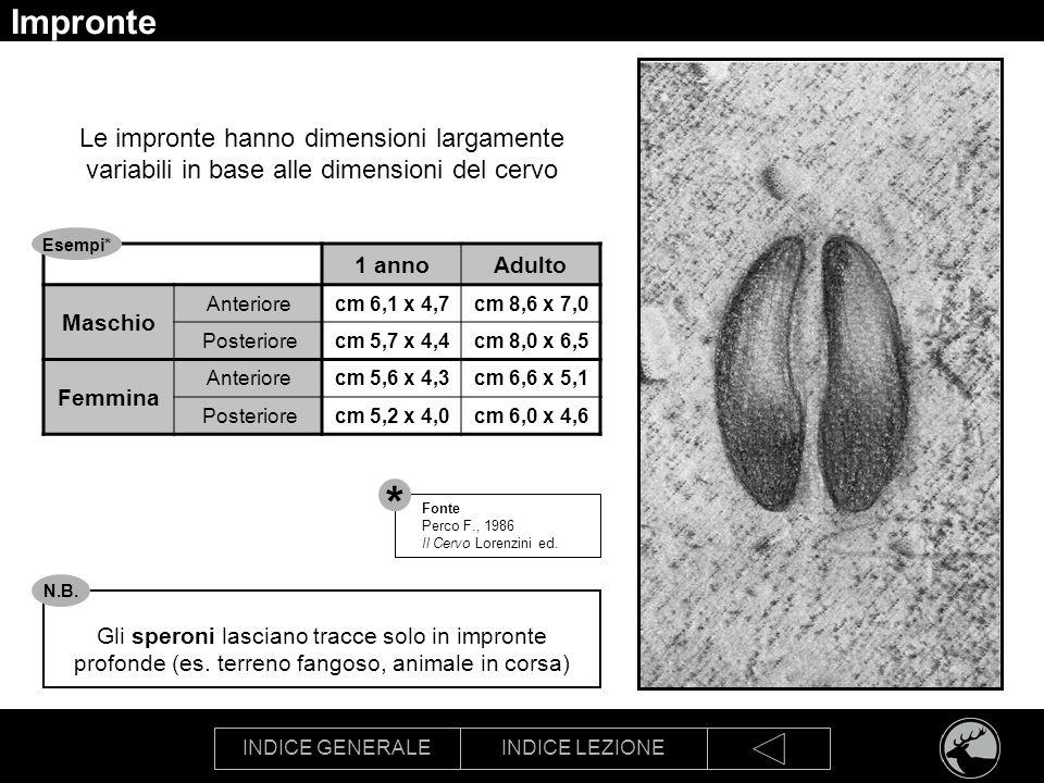 INDICE GENERALEINDICE LEZIONE Impronte Le impronte hanno dimensioni largamente variabili in base alle dimensioni del cervo 1 annoAdulto Maschio Anteri
