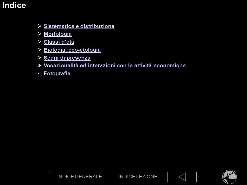 INDICE GENERALEINDICE LEZIONE Indice Sistematica e distribuzione Morfologia Classi detà Biologia, eco-etologia Segni di presenza Vocazionalità ed inte